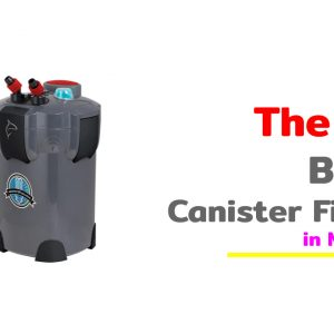 The 10 Best Canister Filter in Market